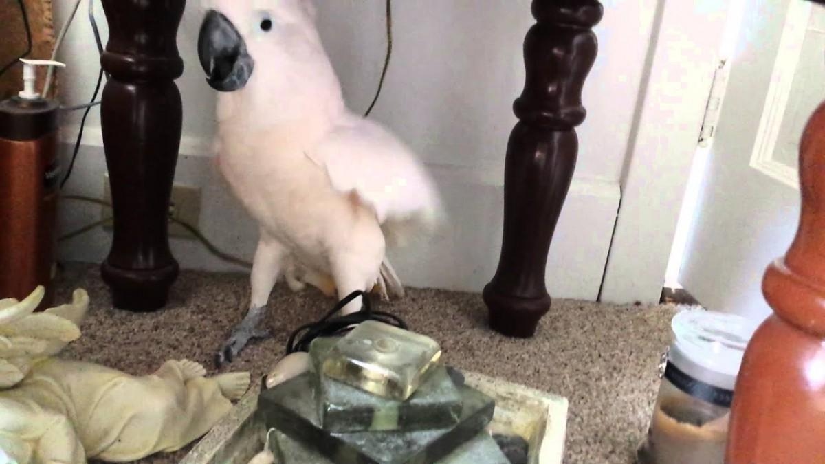Birds Of Satan Booking Agency | Birds Of Satan Event Booking